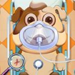 Animal Daycare